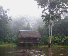 Amazon hut in the mist (Byrd on a Wire) Tags: water river amazon cottage hut thatch amazonriver