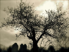 Tree (Mockney Rebel) Tags: tree graves