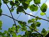 verde sul cielo