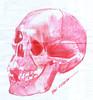 craneo a lapicero (ivanutrera) Tags: craneo sketch sketching skull draw dibujo drawing dibujoalapicero boligrafo lapicero pen calavera calaca ilustracion dibujoaboligrafo