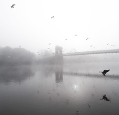 Fog on the Trent (djemde) Tags: nottingham bridge mist birds fog river geese day trent nottsflickrexhibit2009