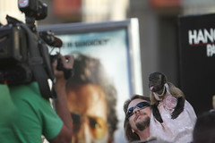 Crystal the monkey at the Red carpet premiere of Hangover Part 2 at the Graumann Chinese theater on Hollywood Blvd. tonight (kjdrill) Tags: california justin usa mike zach movie ed paul losangeles tyson ken bradley hollywood cooper premiere blvd helms giamatti 1206 bartha jeong galifiankis hangoverpart2 monkeythailandfilmcomedyfunny
