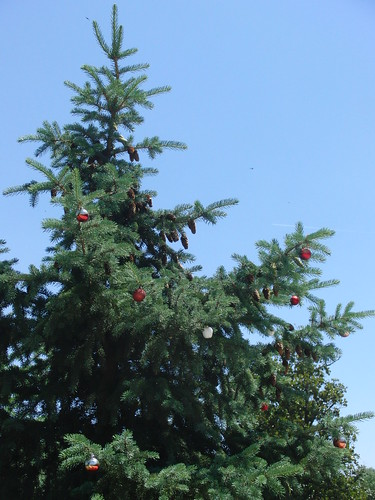 Arbol navideño en mayo