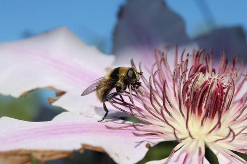 Traveling Pollinator