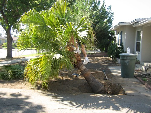 The Husband: 1 - Palm Tree: 0