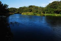 茶房柿田川前から柿田川を眺めて