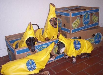 bananadogs