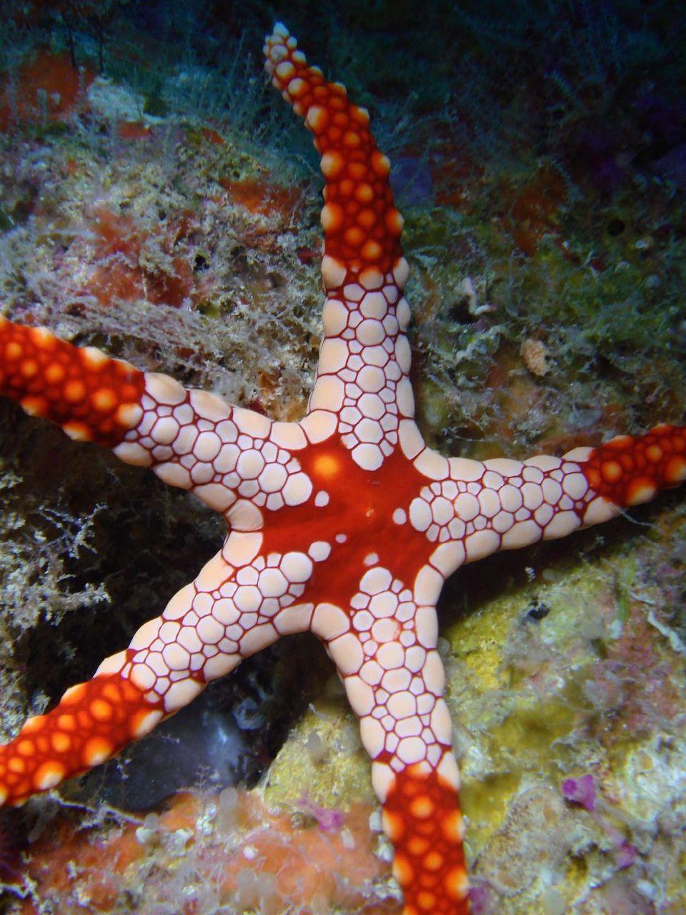 Photo plongee 3 decembre 2007 Poindimie #13