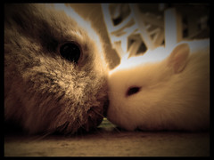 bunny love [ClickLinkBelow] (Antonio Galati) Tags: pet white rabbit bunny love mom sweet lol mother pup piccolo poil bianco blanc amore tender lapin petit conigli conejos