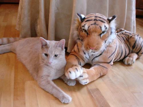 Tiger m'est témoin que..... par Mamanchat Denyse