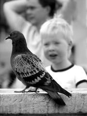 il piccione + bello del mondo! (Village9991) Tags: windows people me myself person persona photo graphics foto village gente picture hobby monroe xp imagine grafica immagine immagination mosaicos astract 9991 village9991