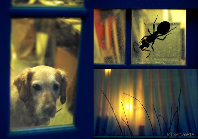 trio-bleu-fenêtre