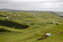 Xhosa meadows