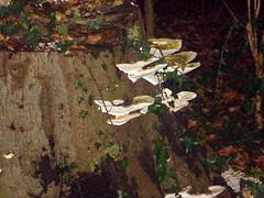 Elves seat (Sach'mo) Tags: mushroom paddestoel elves elfenbankje