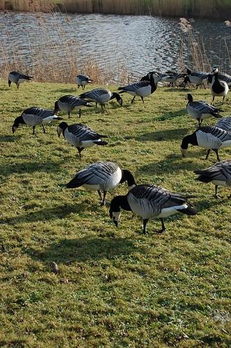 鳥いっぱい