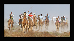 Camel race (KamiSyed.) Tags: wedding pakistan man men kids women desert culture camel arab desi pakistani punjab cultural punjabi islamabad weddingphotographer rawalpindi urdu taxila weddingphotography camelrace cholistan woaman studio9 mywinners weddingphotographs weddingpix kamisyed kamransafdar chinak