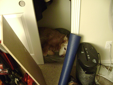 Scotch in her closet room