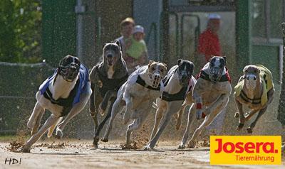 Greyhound-Finale_400