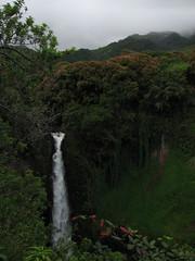 Makahiku Falls (tarmo888) Tags: usa vertical forest hawaii waterfall maui haleakala americas wysiwyg canonpowershot haleakalā 攝影 puhkus vacationtravel photoimage sooc kosk s3is makahikufalls gisteqphototrackr year2008 geotaggedphoto фотоfoto