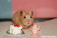 Happy Birthday Nicholas!!! *Niko* (Seattle Roll) Tags: birthday pet animal cake golden hamster 60mm rement syrian f28d d80