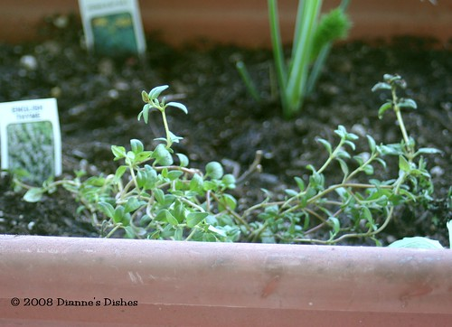 Herb Box English Thyme