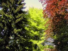 Colors (Gibi 1) Tags: alberi natura colori contrasto