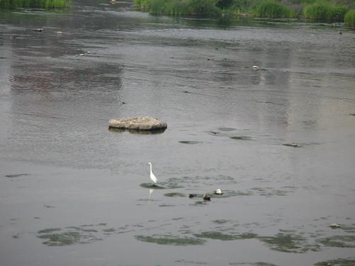 River birds