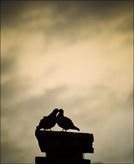 Doves #Kiss (Carlo Marras Photographer ) Tags: birds backlight clouds kiss dove chapeau inspire ems soe controluce themoulinro