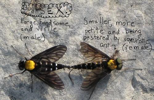 bug_sex