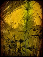 ... from a spider's web (bethrosengard) Tags: bethrosengard photomanipulation digitallyenhanced photoart digitalmagic digitalart