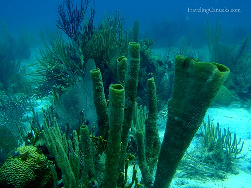 Belize Barrier Reef at Laughing Bird Caye