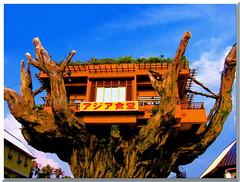 Asia Restaurant in Naha, Okinawa () Tags: fab tree japan restaurant asia vivid  okinawa  takeabow   supershot mywinners anawesomeshot impressedbeauty superbmasterpiece wowiekazowie diamondclassphotographer flickrdiamond ysplix ispeakjapanese excapture thisphotorocks theperfectphotographer earthasia