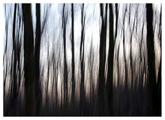 In the Forest (hutchyb) Tags: trees blur forest haunted spooky slowshutter eastyorkshire hauntedforest betterthangood spookyforest