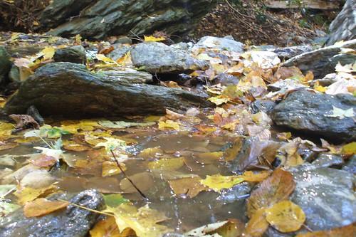 Leaf Pool