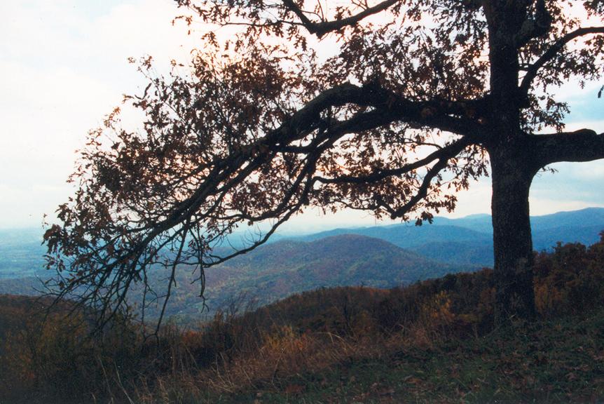 Shenandoah 3 Tree