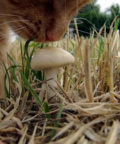 Nosey cat