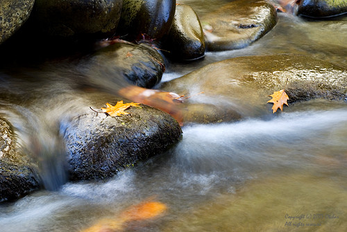 Creek at Great Smoky Mountain N.P.