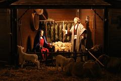 Merry Christmas! (dididumm) Tags: sheep christmasmarket weihnachtsmarkt crib manger lamb merrychristmas lifesize ulm nativityscene krippe schaf weihnachtskrippe lamm christkindlmarkt badenwuerttemberg froheweihnachten lebensgroß christkind