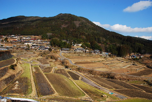 坂折棚田(横から)