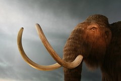 rbcm_mammoth2