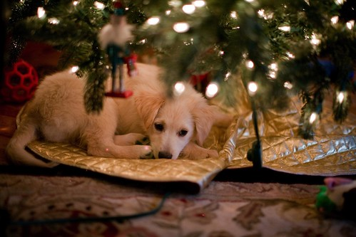 Puppies under the tree