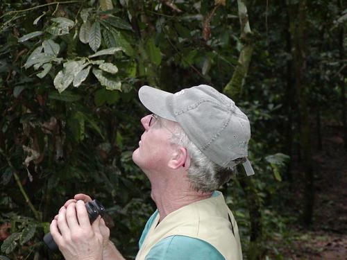 scrutinizing the canopy