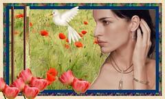 tulipe et coquelicots (piterkess) Tags: fleurs femme cadre panoramique tulipe coquelicots