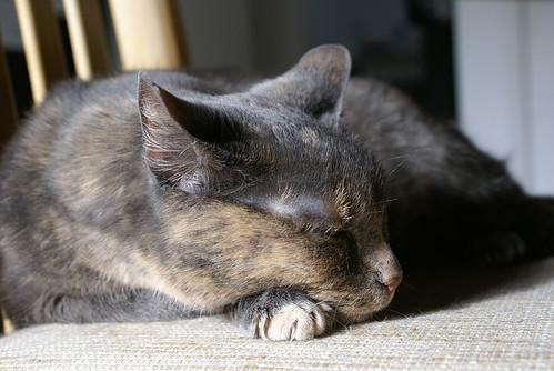 sleeping posey