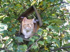 No birds in my tree! (konnykards) Tags: cats dylan cat beautifulcats