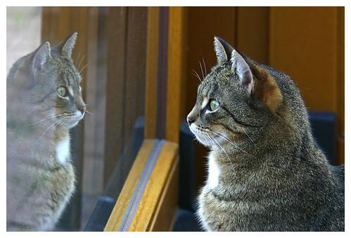 ojos de un gato