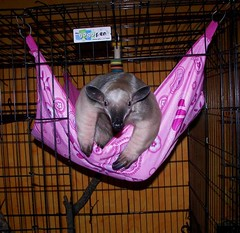 This hammock it pink! What gives?
