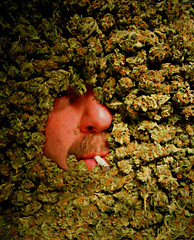 the dope on bruce (professional recreationalist) Tags: selfportrait green eye tristan ma nose j stash weed fattie jay tea outdoor indoor lips pot hydro shit oil thc shake peek mayo bud dope brucedean professionalrecreationalist marijuana roach skunk doobie pound hash blunt homegrown herb maryjane cannabis parker joint legal chronic nard iss reefer hooter sativa hemp hashish charas 96 m