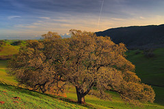 late afternoon at round valley (Marc Crumpler (Ilikethenight)) Tags: california trees sunset clouds canon landscape hiking trails hills bayarea eastbay ebrpd naturesfinest roundvalley contracostacounty eastbayregionalparkdistrict supershot tamron1750 sfchronicle96hours 40d ultimateshots excellentphotographerawards canon40d theperfectphotographer goldstaraward