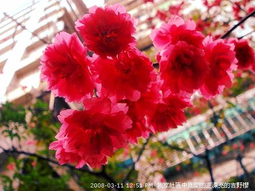 2008_03_11 021